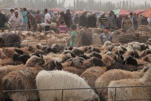 Dia 14 Mercado de Animales