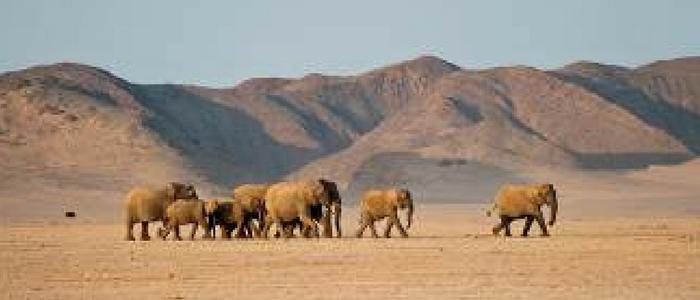Elefantes en el desierto de Namib