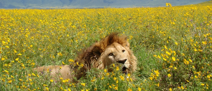 reserva de OL Pejeta Conservancy en Kenya