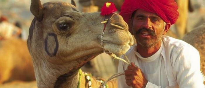 Qué visitar en Púshkar: el mayor mercado de camellos