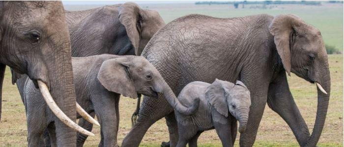 La fauna en kenia