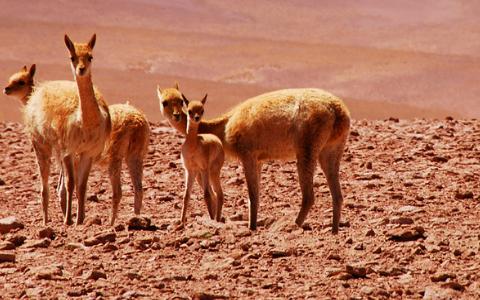 Desierto de Atacama, un viaje a otro mundo