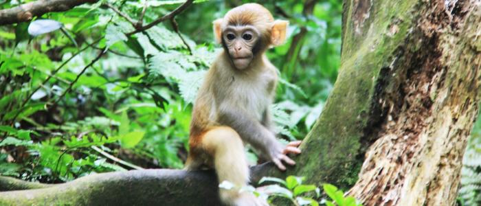 Monos en Zhangjiajie China