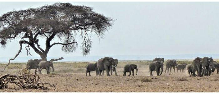 África, el mejor viaje aventura con amigos