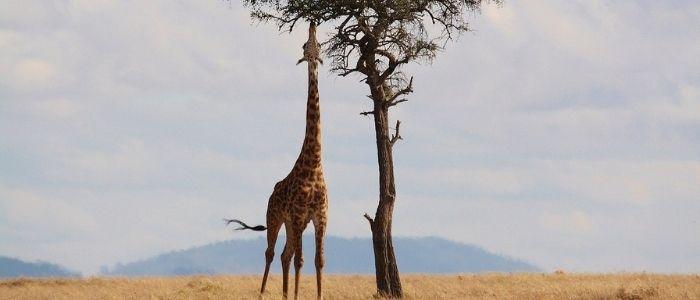 ¿Cuál es el mejor parque nacional de Kenia?