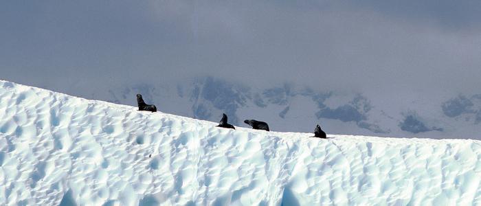 desierto de hielo en la Antártida